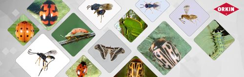 best Insects Prevention ways