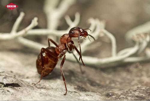 كيفية التخلص من النمل نهائيا