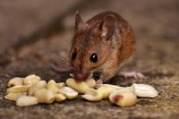Rodents Control service